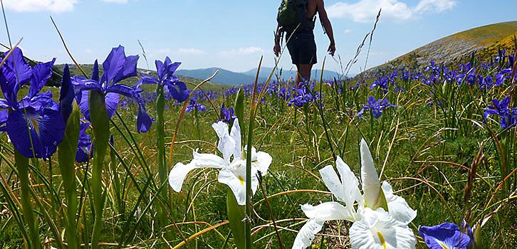 Vandring kring Mt Blanc heltid